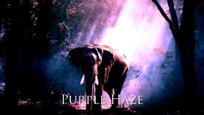 PurpleHazeプリセット